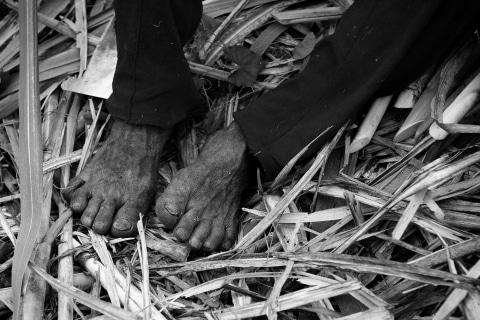 05_Zuckerrohr-Ernte-Negros-Philippinen