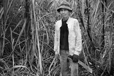 08_Zuckerrohr-Ernte-Negros-Philippinen
